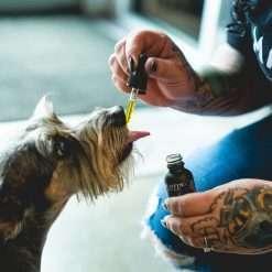 EXTRA-STRENGTH CBD OIL FOR PETS